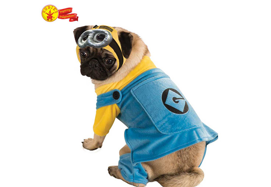 Win a Minion costume for your dog!