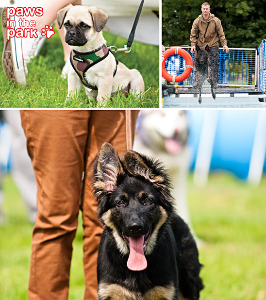 Paws in the Park September 2015