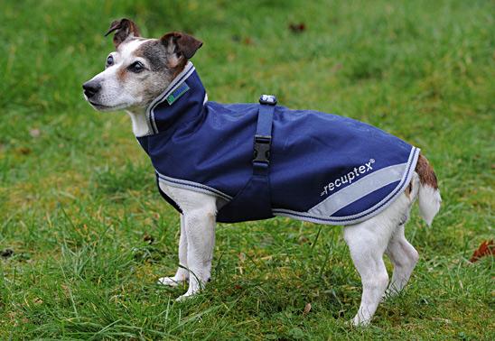 Win a Bucas Recuptex dog rug!