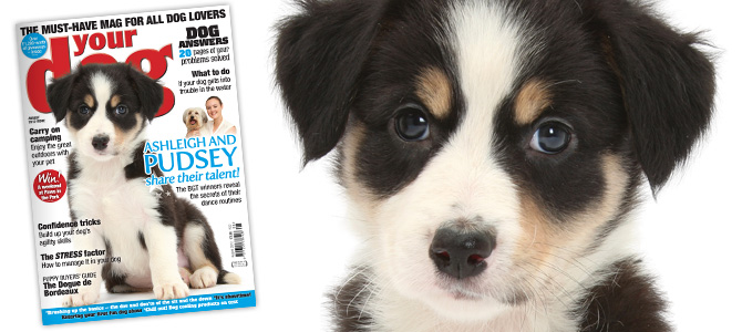 Your Dog Magazine August 2012