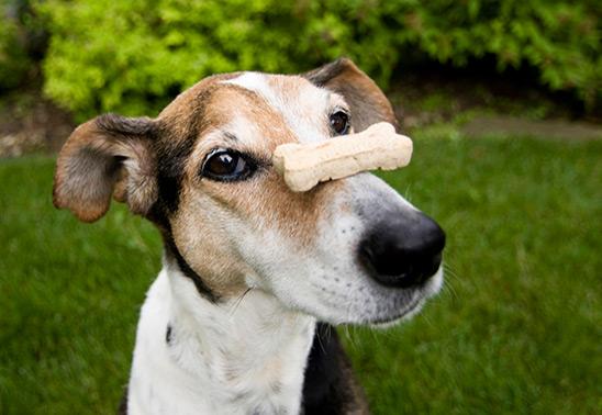 5 dog myths busted