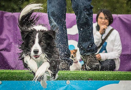 Top ten activities for dogs to enjoy at DogFest 2017!