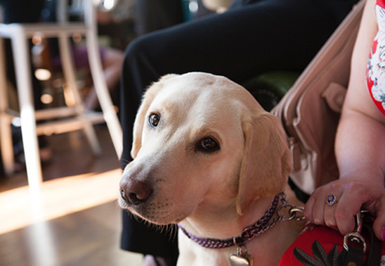 Guide dog owners take part in 'First Blind Dates'