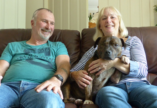 Abandoned Staffy-cross finally finds new home