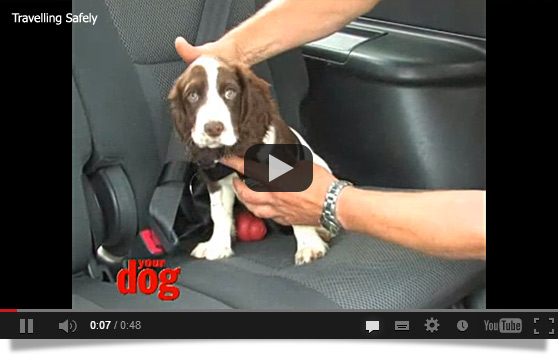 Securing dog in car video