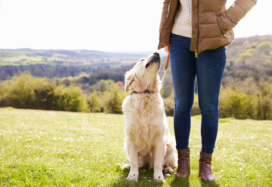 Five things to do with your dog this weekend!