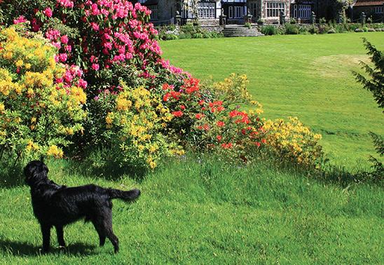 Dog-friendly garden