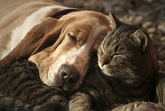 How can I get my dog to be gentler with my cat?