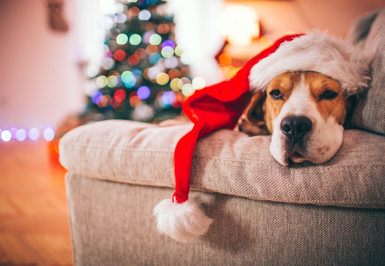 10 ways to make your dog part of Christmas