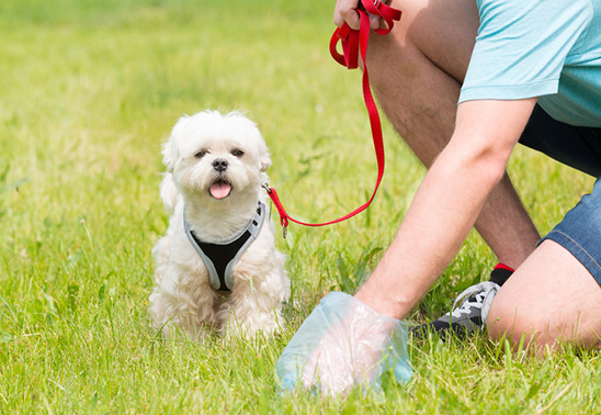 A quarter of dog owners fall foul of dog poo rules