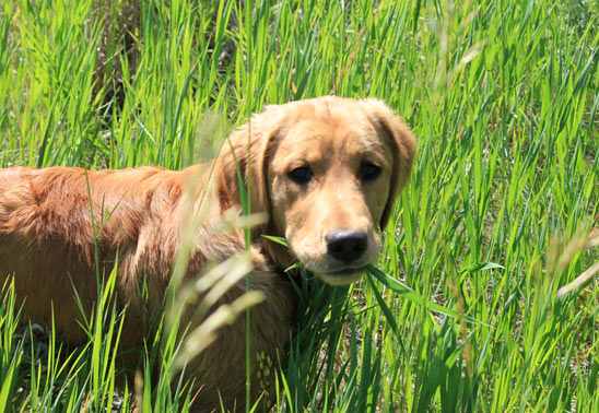 10 dog superstitions