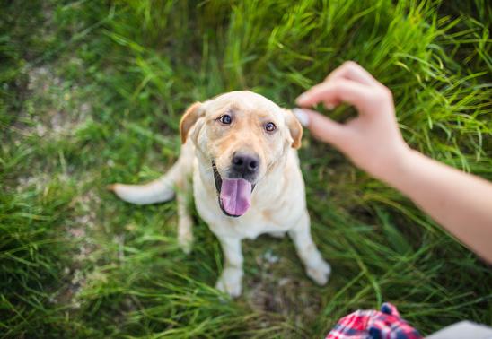 Improve your dog's training