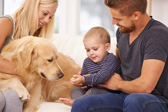 Introducing your dog to your baby