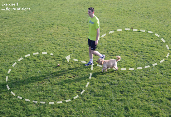 Shape up and get fit with your dog