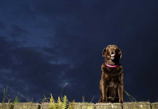 Five ways to make the most of dog walks in the dark