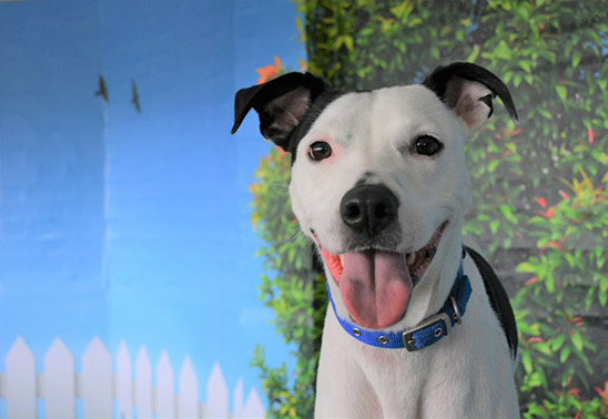 It's all smiles at Battersea for National Dog Day