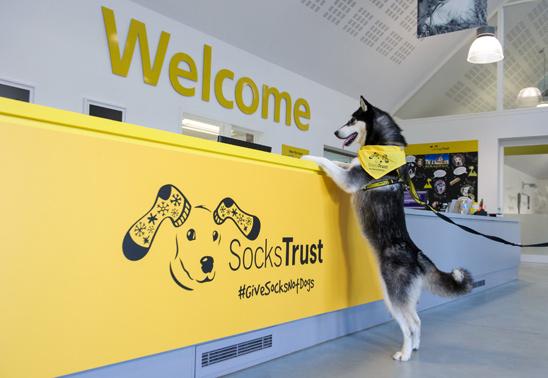 Socks Trust