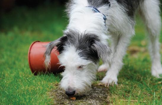 How can I keep my blind dog stimulated?