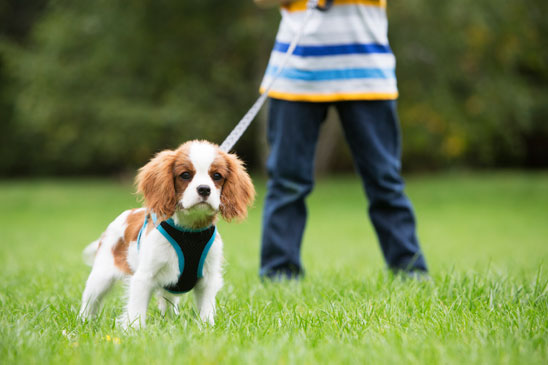 Do children need to be a certain age to control a dog?