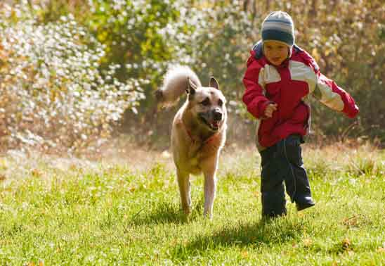Is my child safe around my dog?