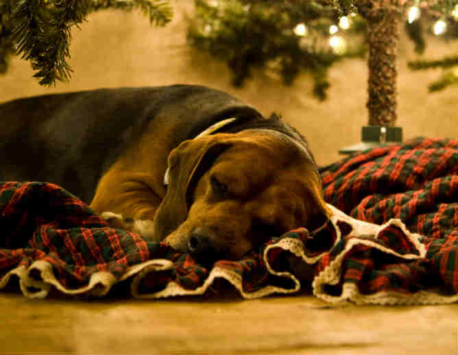 christmas_dog_sleeping