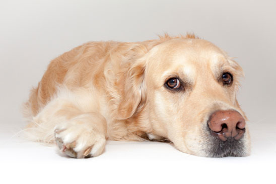 How do I know if my dog has kidney failure?