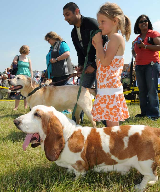 Organise your own fun dog show