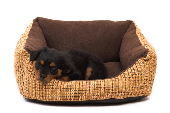 What type of bed should I buy for my new puppy?