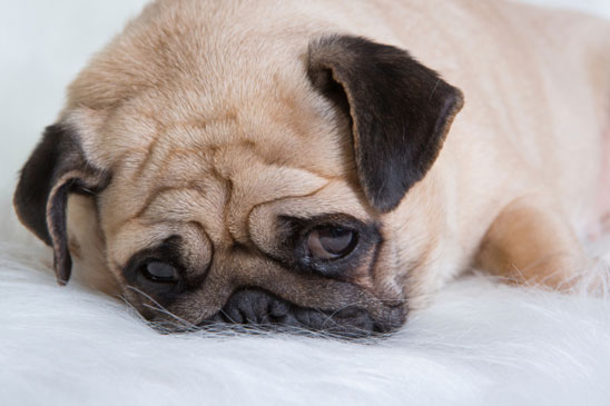 The Causes Of Stress In Your Dog