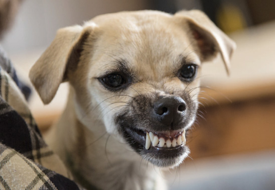 your dog how to cope with your aggressive dog the your