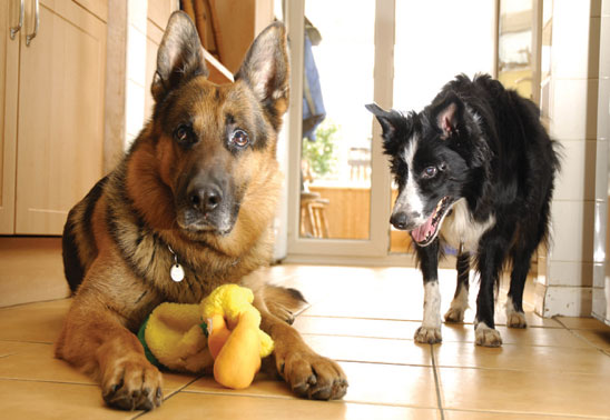Are some dogs more prone to conflict with others?