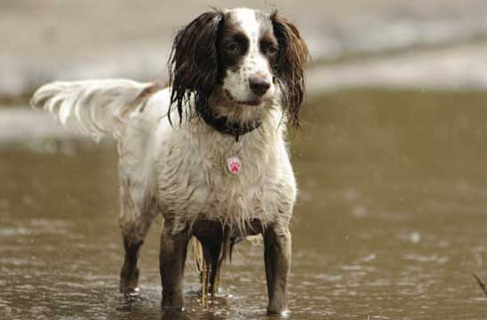 Will washing my dog too regularly damager her coat?