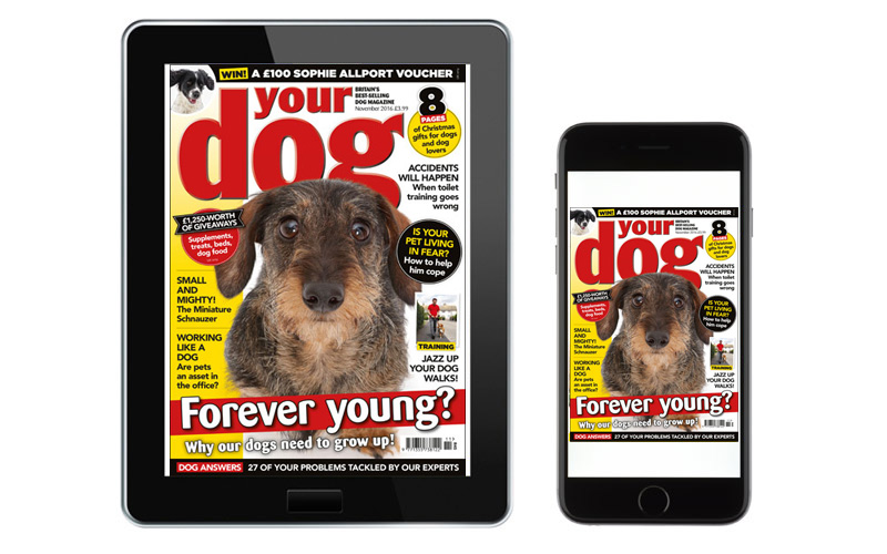 Your Dog digital editions