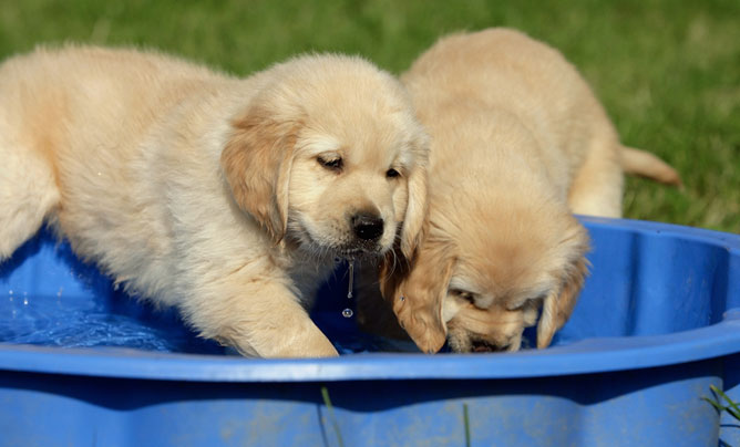 puppies in paddling pool