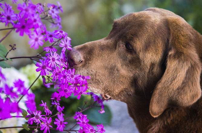 Allergy Free Dog Breeds Uk