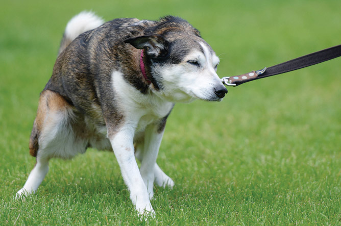 Incontinence In Older Dogs Natural Remedies