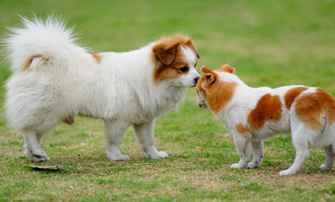 how to become a canine behaviorist