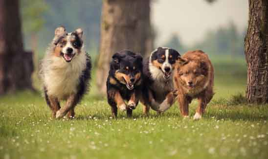 Dogs in group