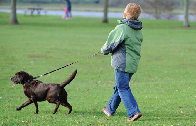 How To Walk A Dog Without Him Pulling