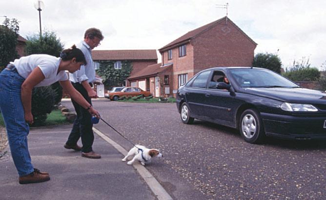 Dog lunging towards car