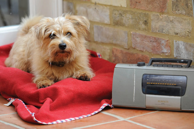 Dog in bed with radio