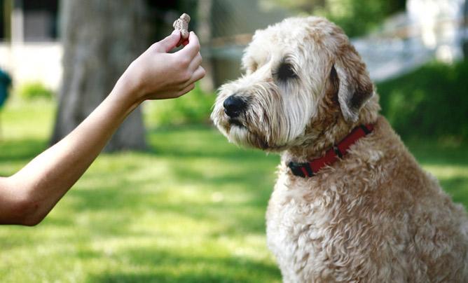 Dog Training Holidays Uk