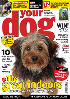 Your Dog February 2015
