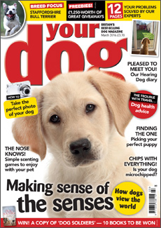 Your Dog March 2015
